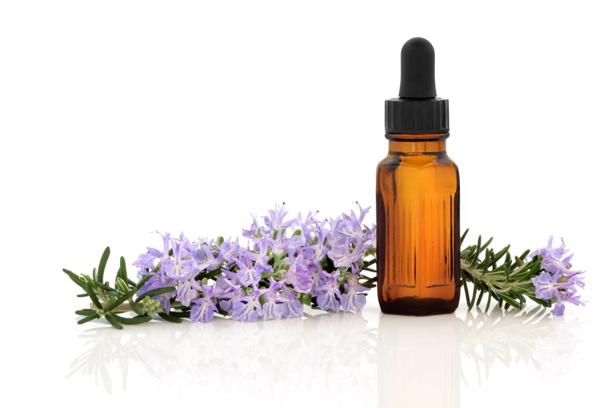 Uses & Benefits Of Rosemary Essential Oil